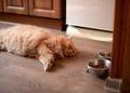 3 cauze pentru care pisica cere mereu de mancare